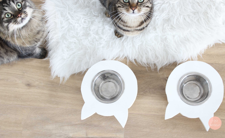 bol pour chat