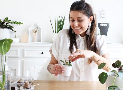 DIY 78 – Boutures plantes d'intérieur