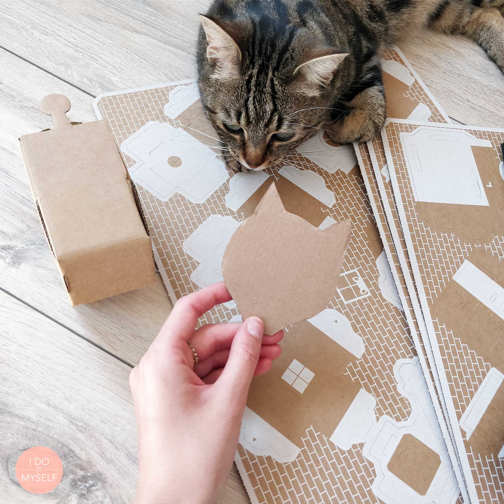 Cats and DIY