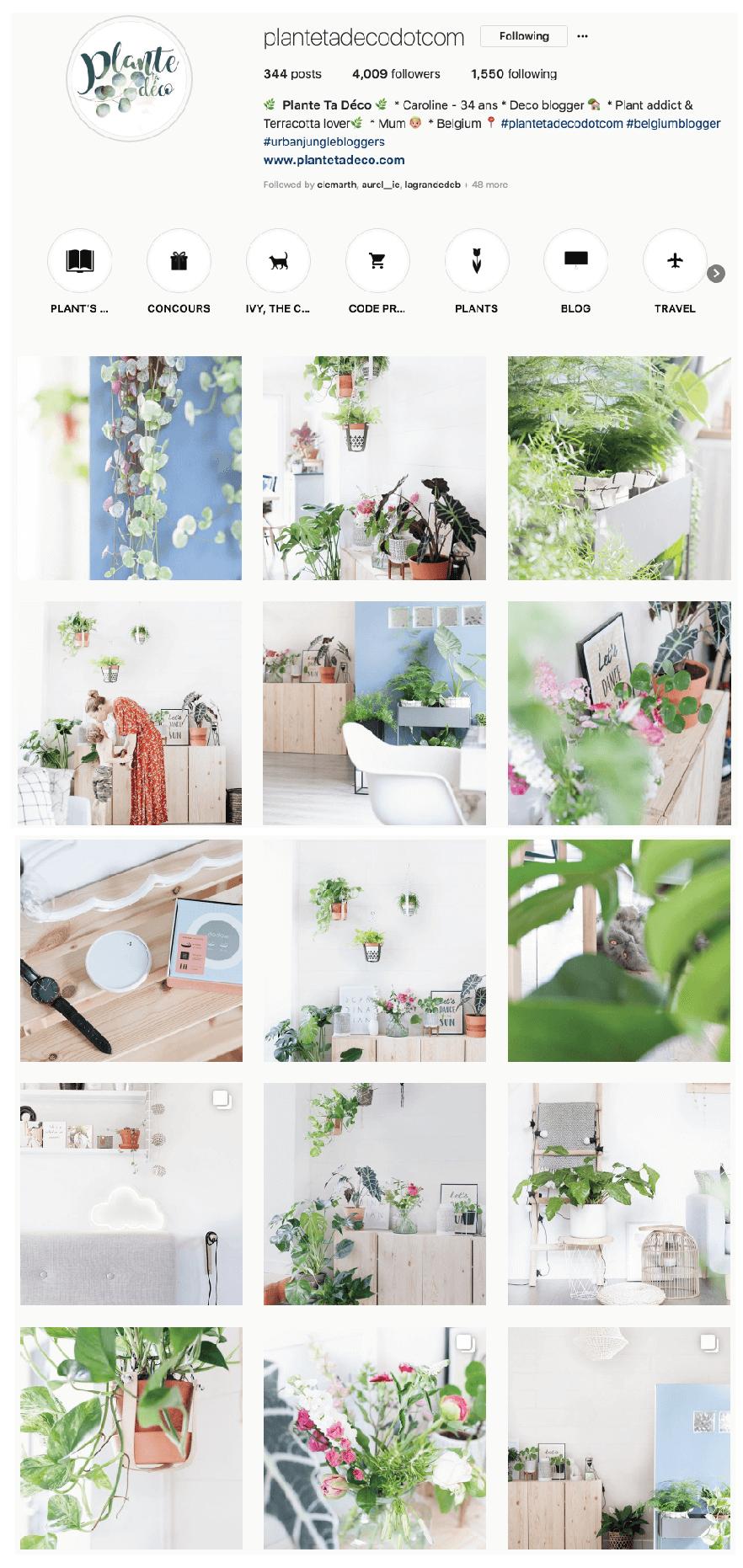 plante et deco