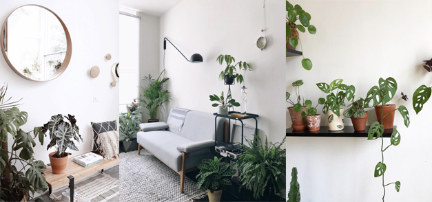 Inspirations : Les intérieurs green